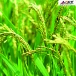 Scope-of-B.-Sc-Agriculture